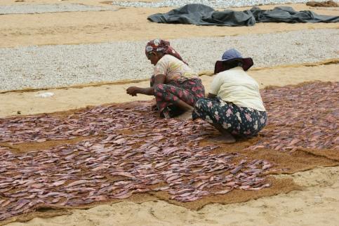 rybi rynek w Negombo