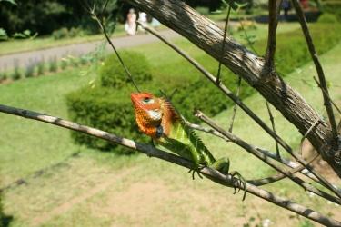 Park Botaniczny w Kandy