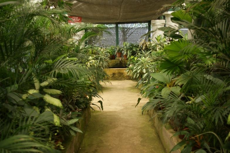 Park Botaniczny Kandy
