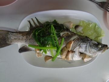 rybka - Prachuap